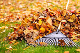 Leaf Collection to Begin October 16 (New Date!)