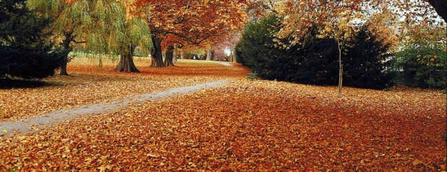 Leaf Collection Nears Completion for 2015