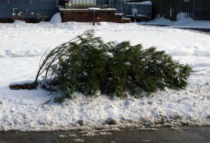 Discarded Christmas Tree Collection